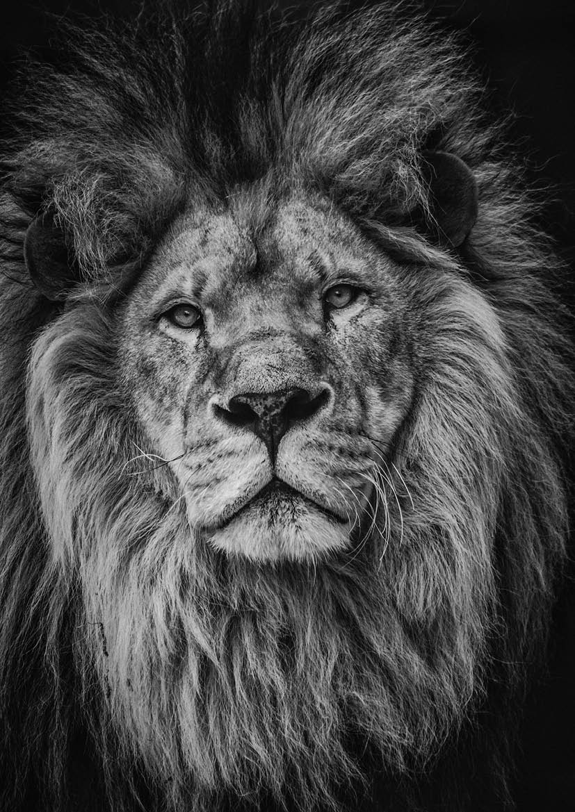 Poster 'Lion'
