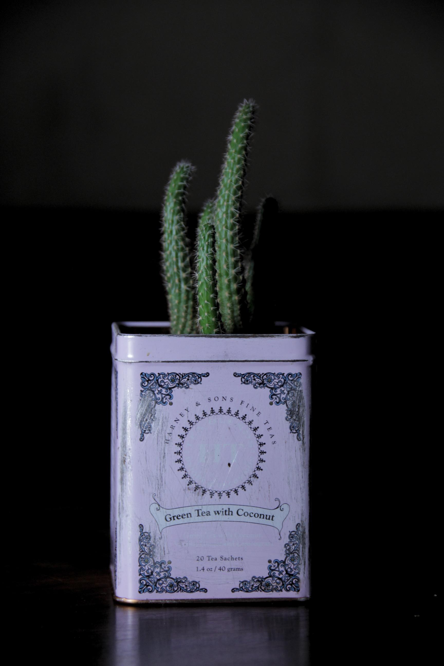 Teedose als Pflanzentopf