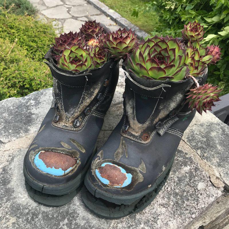 Pflanzen in Schuhen