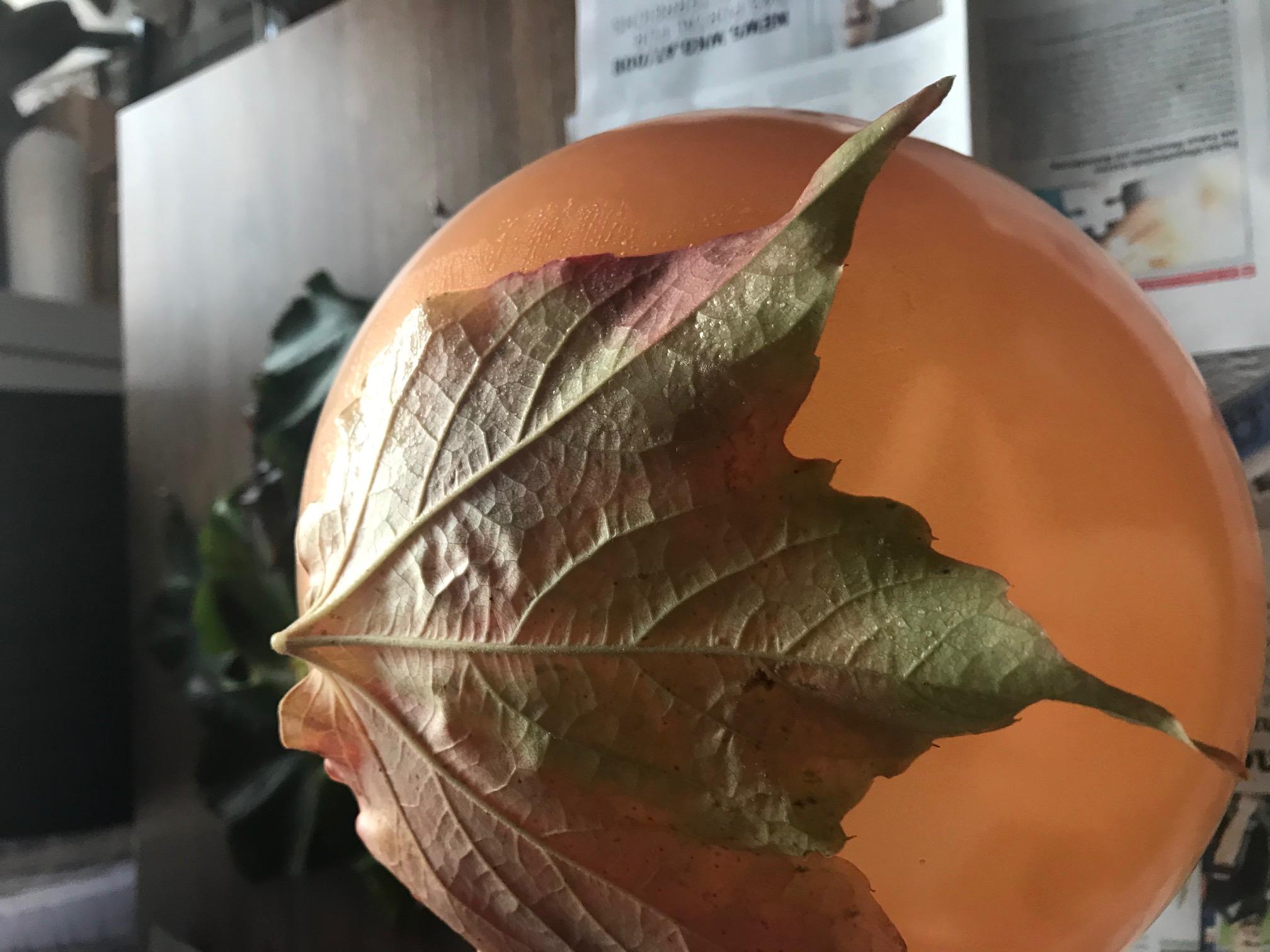 Schüssel aus Blätter
